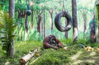 Orangutan celebrating his birthday