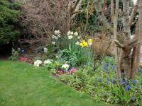 My garden in Spring 2014