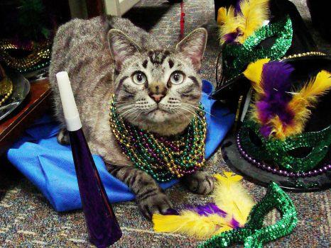 #3:  Browser the Cat celebrating Mardi Gras on the job