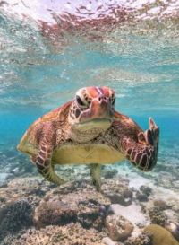 """""""Terry the Turtle flipping the bird"""""""