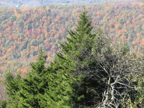 view from Cheat Mountain