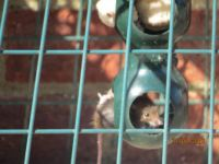"""L B J"" on the fat ball feeder but it isn't a bird!!!!!!"