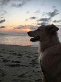 Sadie at sunrise