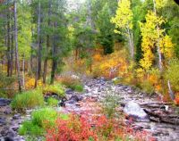 Fall stream, Grand Teton Natl. Park, Wyoming.  Easier
