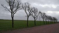 Oosterreeweg, Schiermonnikoog
