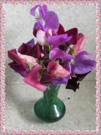 Spring Sweetpeas, Smaller.