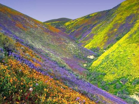 Indian Valley of flowers