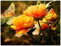 CGI ART -  Orange Flowers with Butterfly