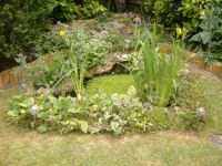 Garden - Pond & Rockery