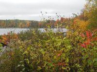 Wildflowers, Lake, trees no rock