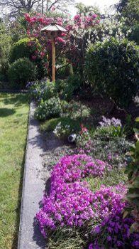 Mijn tuin in het voorjaar