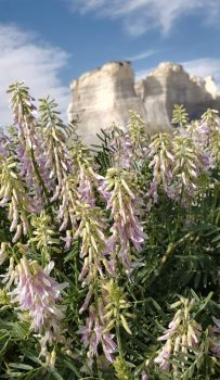 The Flowers at Monument Rocks!