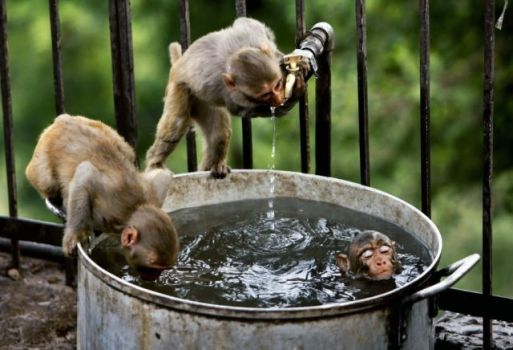 Getting refreshed in India..