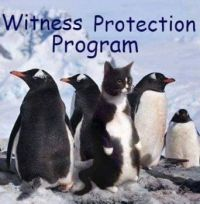 witness protection program (larger)