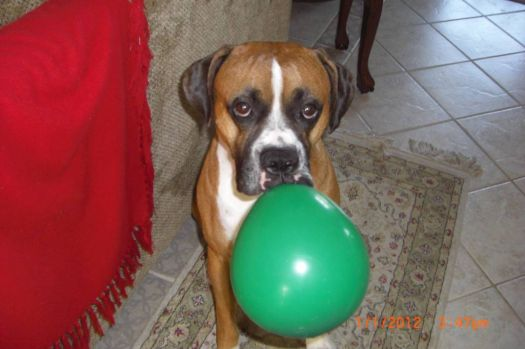 max with his balloon