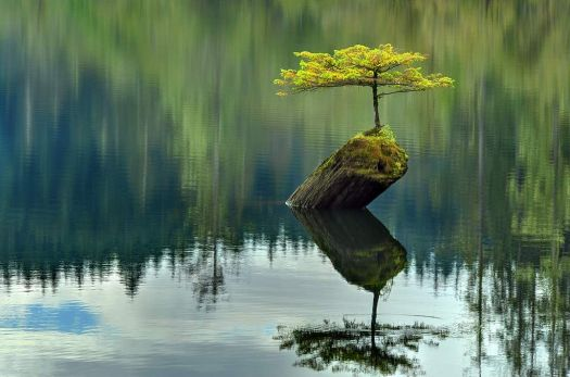tree-log-lake