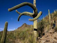 Reaching Saguaro
