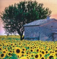 Interesting Building  In Provence Sunflower Field