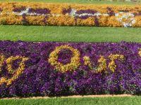 Toowoomba botanical gardens