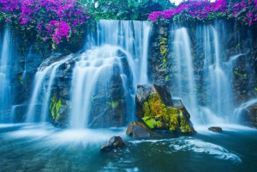 Waterfall and Flowewrs