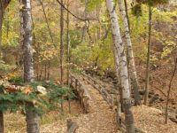 Fall leaves on bridge