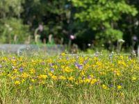 Miniature meadow