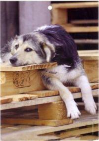 doggie[1]