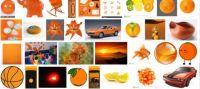 Orange for Tamara