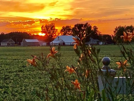 Tiger Lilies and Sunset