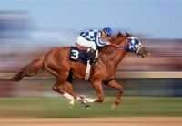 THEME:  Horses   Secretariat  the Triple Crown Winner in 1973, winning the Belmont Stakes by 31 lengths.