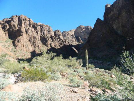Palm Canyon, Arizona