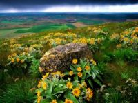 Flowering Mountain In Yellow