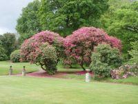 Pencarrow Gardens 1