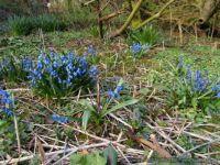 Spring - Bornholm 1