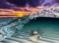A stingray diving under a wave
