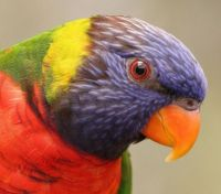 Profile of a parrot