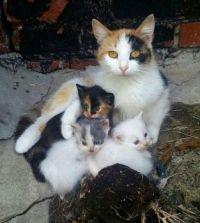 mama poes en de kindjes