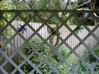 Seasonal - Summer - 2021 - Garden Swing with Butterflies