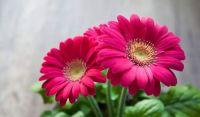 flower-63