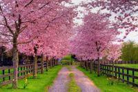 spring driveway