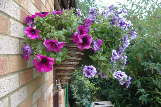 Garden - Hanging Basket - Back Garden - Side View