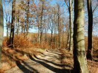 cesta podzimem