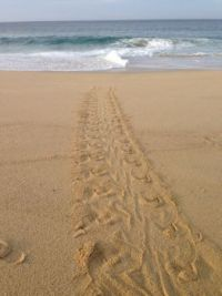 Sea Turtle Tracks, Cabo San Lucas, Mexico