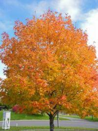 Colors of Fall - Nova Scotia