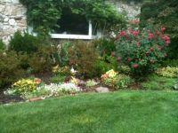 Front garden 8-13-14