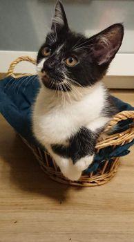 Kočka v koši