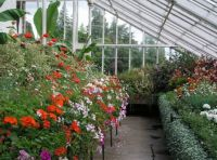 Glasshouse plants