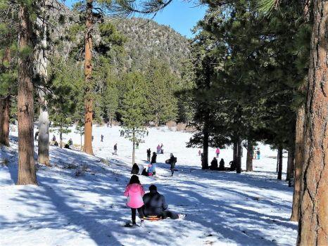 Sledding in the Nevada Mountains