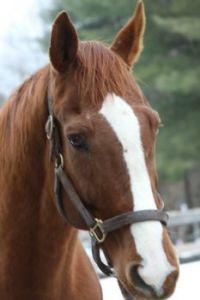 horses 1213 037