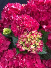 Prachtige bloei